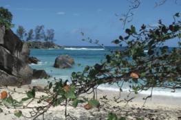 Les Seychelles, une vraie jungle