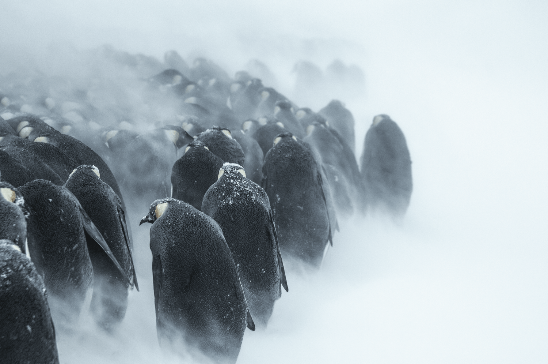 carnet de voyage : mission TA66, Julien Vasseur, Terre Adélie , Antarctique