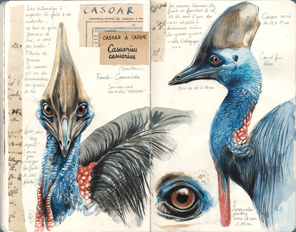 """Carnet de voyage : Stéphanie Ledoux avec la Fondation Iris en Papouasie occidentale - """"Dans la tête et le cou de l'oiseau"""""""