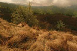 Dans un champ de Carpates