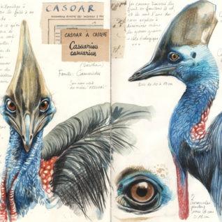 Stéphanie ledoux : le casoar à casque, expédition Papouasie, tirage d'art, Bouts du monde