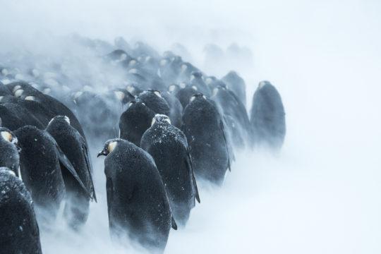 Antarctique : tirage d'art photo, horde glaciale par Julien Vasseur, Terre-Adélie - Bouts du monde