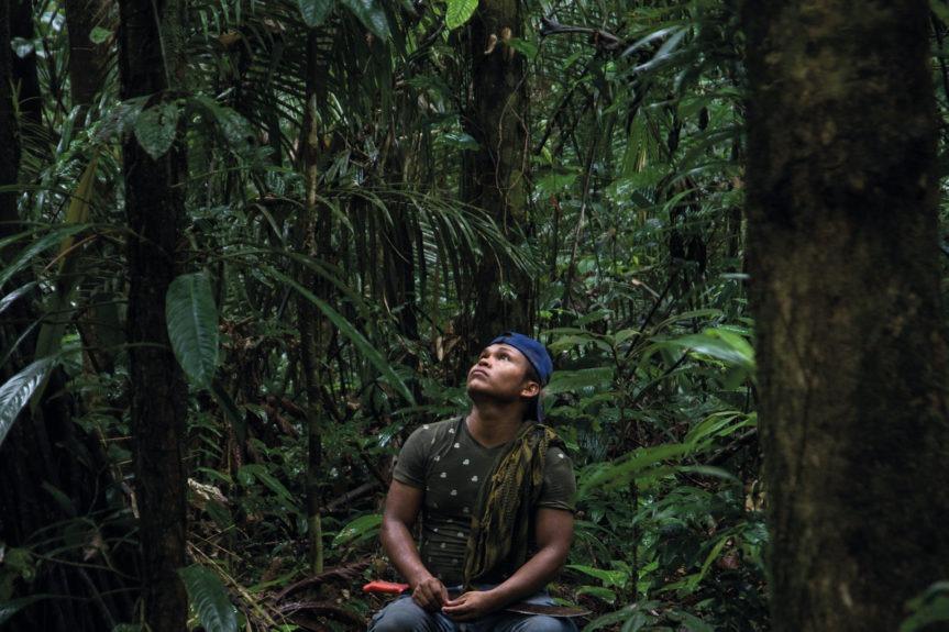Les voix de la forêt d'Amazonie