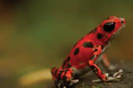 Bouts du monde sur la piste de la biodiversité