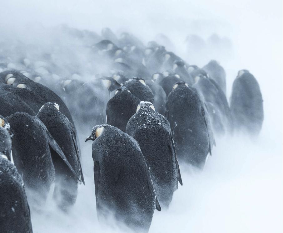 Bouts du monde Antarctique
