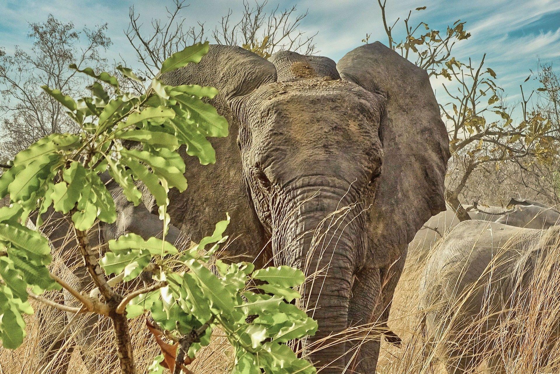 S'approcher des élépants - Bernard Decaudin - Bouts du monde