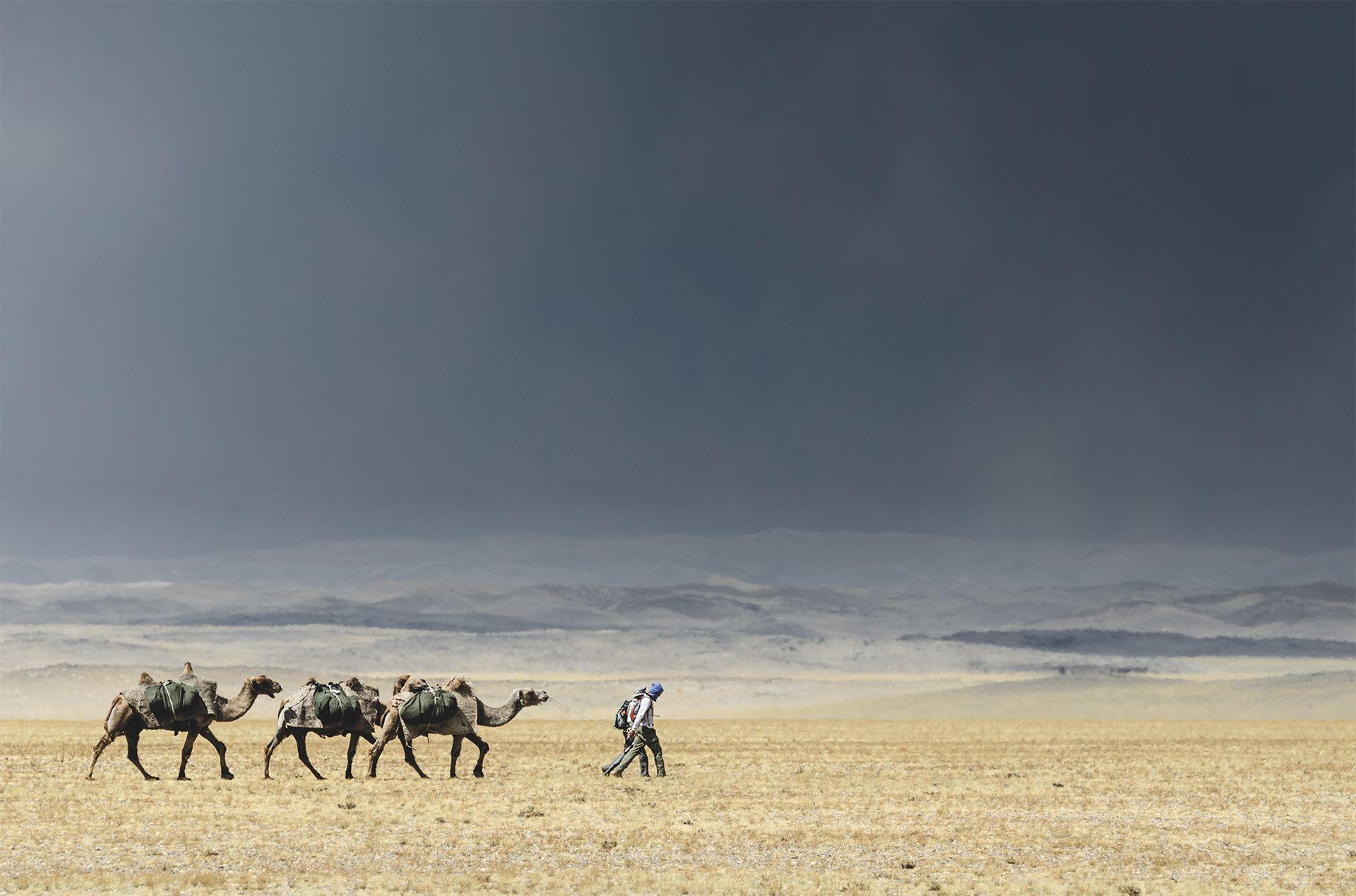 Une caravane dans le désert de Gobi